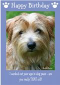"Norfolk Terrier-Happy Birthday - ""Are You Really THAT Old"" Theme"
